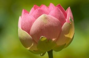 2005-01-19-lotus-pond
